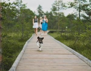 trip with a dog